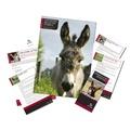 Adopt A Donkey Gift Box 2