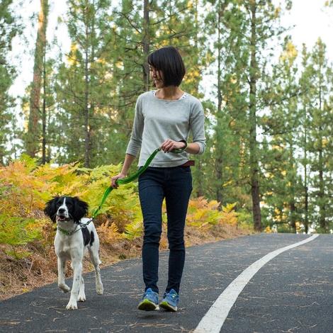 Chain Reaction Dog Collar - Meadow Green 3