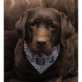 Barkingham Palace Dog Bandana 2