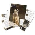 Adopt A Meerkat Gift Box 2