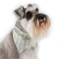 Mint Check Cotton Dog Neckerchief