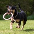 BecoHoop Dog Toy - Pink 5