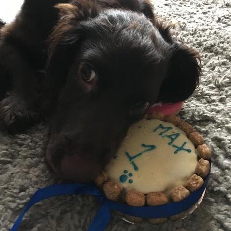 Mini Personalised Dog Cake 7