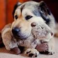Fluff & Tuff Plush Dog Toy – Peanut the Chipmunk 2