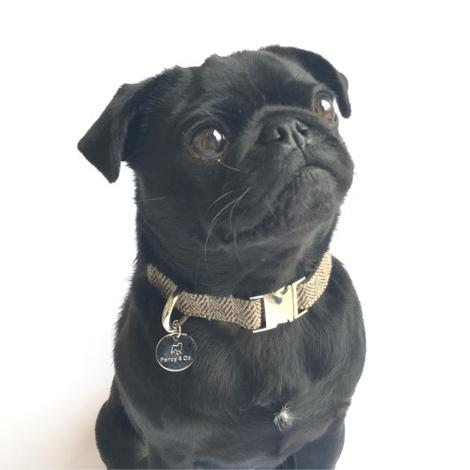 Dog Collar- Beaufort