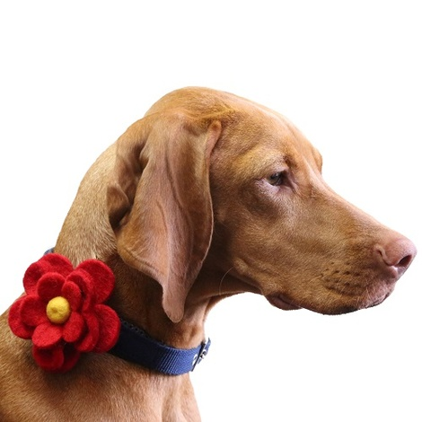 Bloom Dog Collar Flower Accessory - Crimson & Yellow
