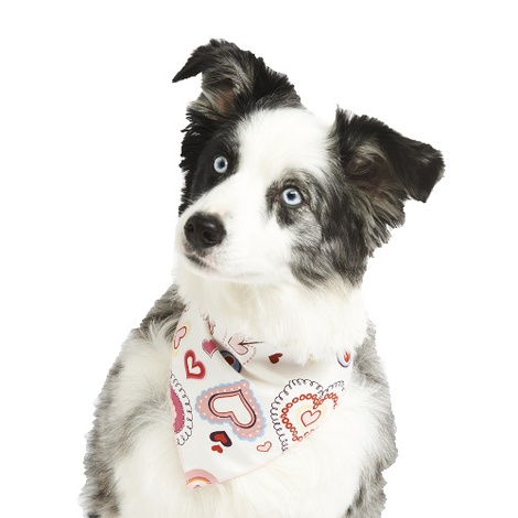 Jammy Hearts Dog Bandana