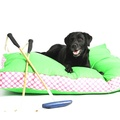 Two Tone Dog Bed - Green & Daisy Stripe 3