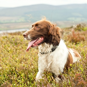 Dog Friendly Hotels Accommodation Petspyjamas