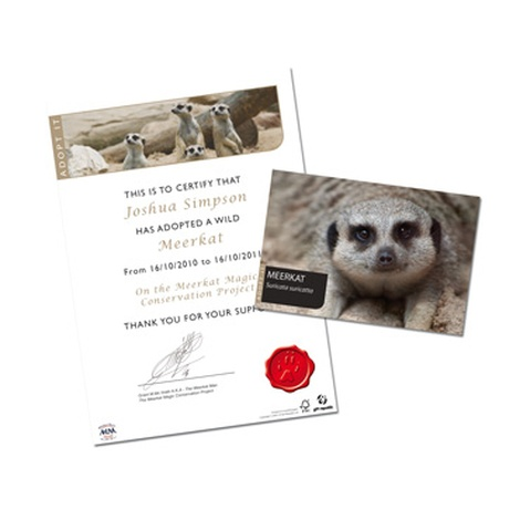 Adopt A Meerkat Gift Box 3