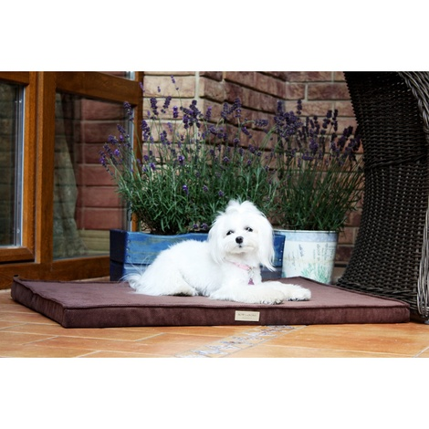 Chocolate Foam Dog Mat 4