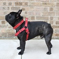 Red Cotton Webbing Dog Harness 2