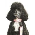 "Lily Dog Collar 1"" Width 3"