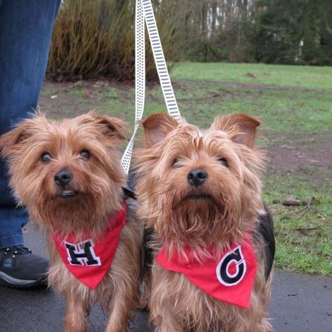 Varsity Dog and Cat Bandana Red 2
