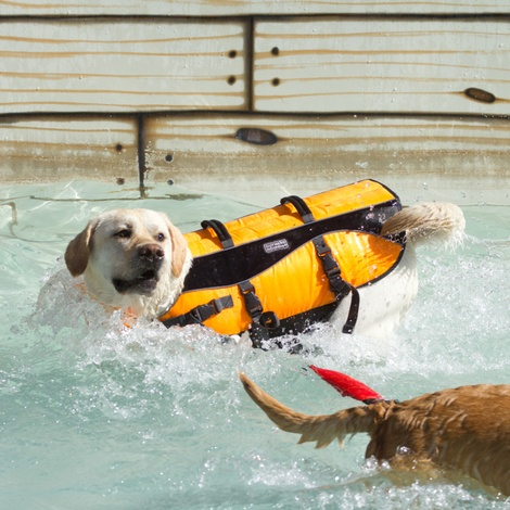 Life Jacket for Dogs - Orange 2