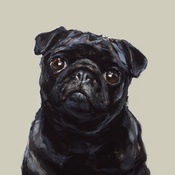 Paint My Dog  - Black Pug Medium Art Print