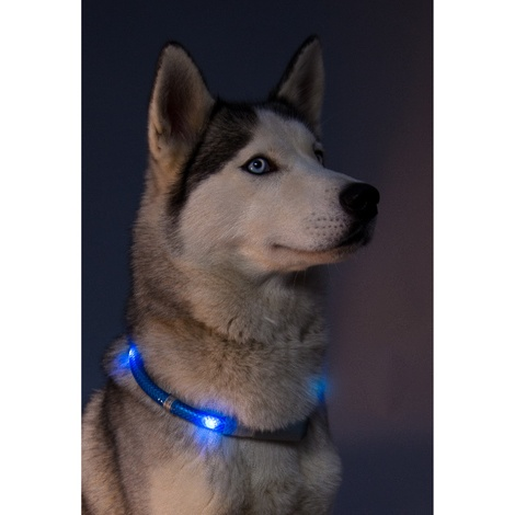 Premium Leuchtie LED Collar - Neon Green 3
