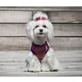 Candy Dog Harness - Pink 4