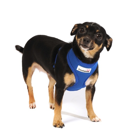 Airmesh Dog Harness – Royal Blue 5