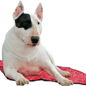 Aqua - Dog Cooling Mat in Red Western