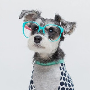 Here are 10 of the top dogs you need to follow on Instagram