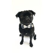 Percy & Co - Collar and Bow Tie - The Anglesey