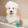 Playful Pup Conditioning Shampoo 250ml 2