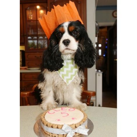Mini Personalised Dog Cake 5