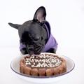 Dog Birthday Cake 3