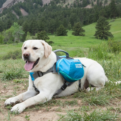 DayPak Backpack for Dogs - Blue 2
