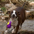 Gripple Dog Toy – Purple 2