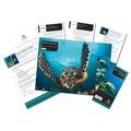 Adopt A Sea Turtle Gift Box 2