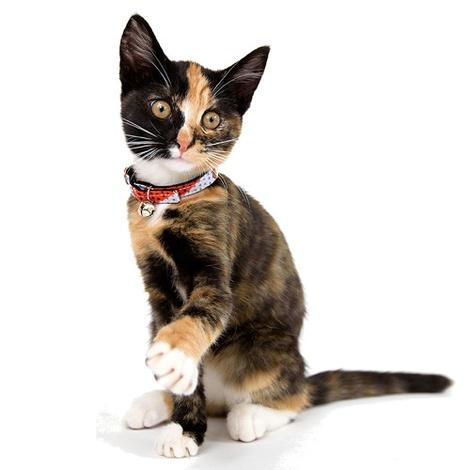 Kitenge Grey Triangles Cat Collar 2