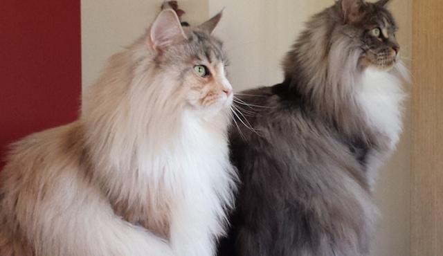 Feline Features 4