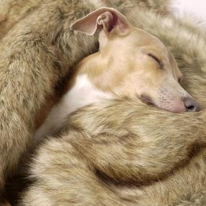 Faux-Fur & Fleece Dog Blanket - Foxy