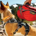 Ruffwear Webmaster Harness - Red Currant 2