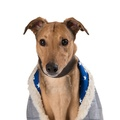 Darcy Sighthound Tweed Coat 2