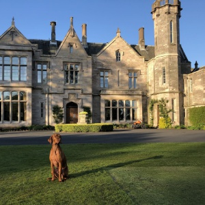<strong>SCHLOSS Roxburghe Hotel & Golf, Scottish Borders </strong> The perfect dog-welcoming getaway that's less than an hour's drive from Edinburgh & Newcastle