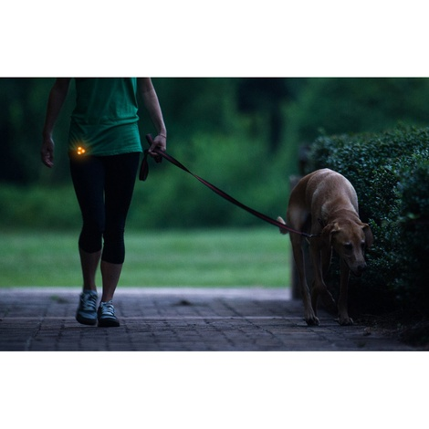 Rigel Multi-Purpose LED Light for Dog Collar – Orange 4