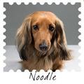 Canine Traveller Kit 4
