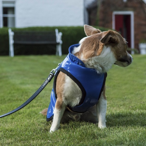 Brighton Bubble Hoodie Dog Coat - Blue 3