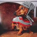 Ellesmere Red Harris Tweed Dog Coat 4