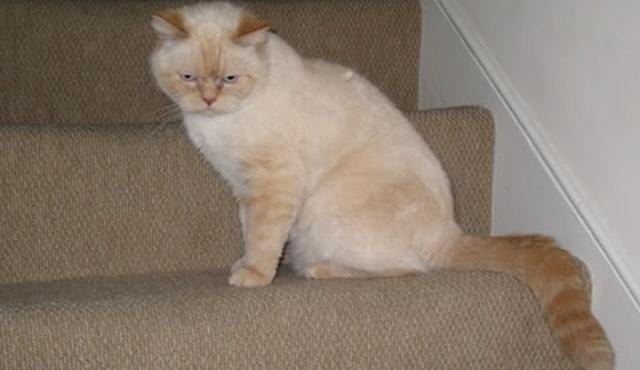 Feline Features 3
