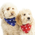 Blue Star Dog Bandana  4
