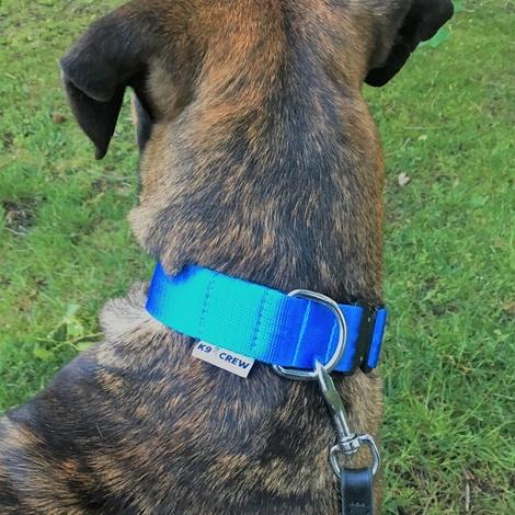 K9CREW COBRA Candy Collar (Blue) 5