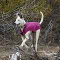 Ruffwear Sun Shower Jacket - Purple Dusk  2