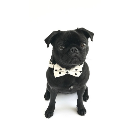 Collar and Bow Tie - Mayfair