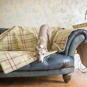 The Lounging Hound - Waterproof Wool Throw - Moorland
