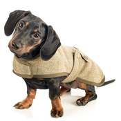 Country and Twee - Tweed Dachshund Coat
