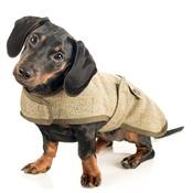 Country and Twee - Tweed Dachshund Coat